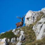 itinarrando - Bramito cervo